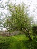 Árbol en Crookham, Northumberland, Reino Unido Foto de archivo