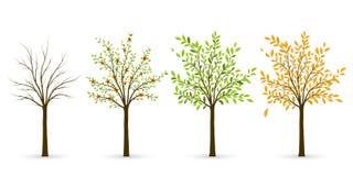 Árbol en cuatro estaciones - invierno, primavera, verano, otoño Vector IL Foto de archivo libre de regalías