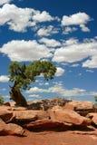 Árbol en desierto Foto de archivo libre de regalías
