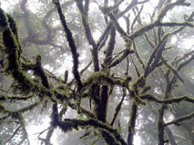 Árbol en Doi-Inthanon Foto de archivo libre de regalías