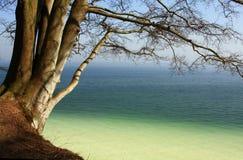 Árbol en el acantilado Foto de archivo libre de regalías