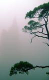 Árbol en el acantilado Fotografía de archivo libre de regalías