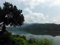 Árbol en el acantilado en el lago inmóvil Begnes Imágenes de archivo libres de regalías