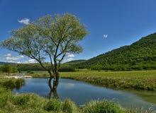 Árbol en el agua imágenes de archivo libres de regalías