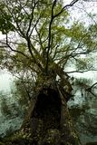 Árbol en el agua Fotos de archivo