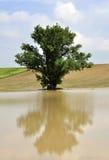 Árbol en el agua de tierra adentro Fotografía de archivo