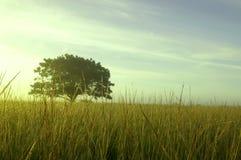 Árbol en el amanecer Foto de archivo