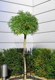 Árbol en el ambiente del metal Foto de archivo libre de regalías