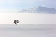 Árbol en el ambiente suave, tranquilo en invierno Fotos de archivo libres de regalías