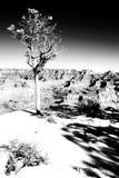 Árbol en el borde Fotografía de archivo