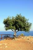 Árbol en el borde de mediterráneo Fotos de archivo