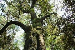 Árbol en el bosque Imagen de archivo libre de regalías