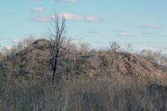 Árbol en el bosque Fotografía de archivo