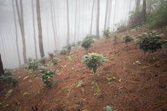 Árbol en el bosque fotos de archivo