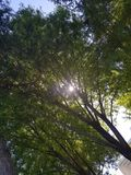Árbol en el bosque con la luz del sol o la estrella del haz Foto de archivo libre de regalías