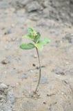 Árbol en el bosque del mangle Imagen de archivo