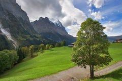 Árbol en el camino Imagen de archivo libre de regalías
