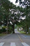 Árbol en el camino Fotografía de archivo libre de regalías
