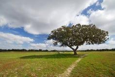 Árbol en el campo Foto de archivo libre de regalías