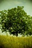Árbol en el campo Fotografía de archivo libre de regalías