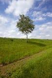 Árbol en el campo Imágenes de archivo libres de regalías