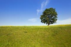 Árbol en el campo Imagenes de archivo