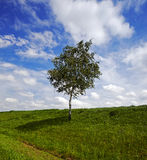Árbol en el campo Fotos de archivo