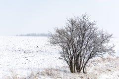 Árbol en el campo blanco Fotografía de archivo