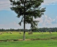 Árbol en el campo de fianzas redondas del heno fotos de archivo libres de regalías