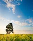 Árbol en el campo de flores Imagenes de archivo