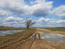 Árbol en el campo de la primavera Fotografía de archivo libre de regalías
