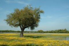 Árbol en el campo florido, primavera Foto de archivo libre de regalías