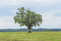 Árbol en el campo en primavera Fotografía de archivo