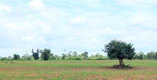Árbol en el campo y el fondo de la nube En el tiempo del mediodía Imagenes de archivo