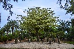 Árbol en el centro Fotografía de archivo libre de regalías