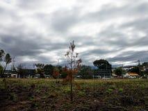 Árbol en el centro del paisaje urbano Foto de archivo