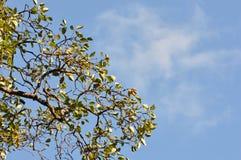 Árbol en el cielo Fotos de archivo