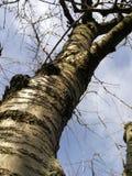 Árbol en el cielo foto de archivo