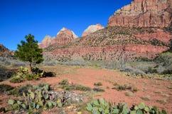 Árbol en el desierto Fotografía de archivo libre de regalías