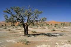 Árbol en el desierto de Namib II Foto de archivo
