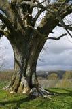 Árbol en el districto del lago, Reino Unido Imágenes de archivo libres de regalías