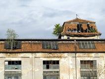 Árbol en el edificio Foto de archivo