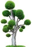 Árbol en el fondo blanco Imagen de archivo libre de regalías