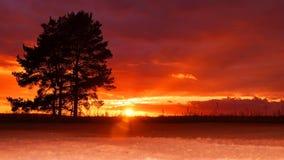 Árbol en el fondo de la puesta del sol del otoño Fotografía de archivo