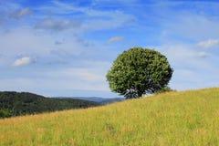 Árbol en el horizonte Foto de archivo libre de regalías