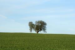Árbol en el horizonte Foto de archivo