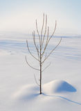 Árbol en el invierno Imagen de archivo libre de regalías