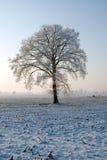 Árbol en el invierno Fotos de archivo