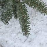 Árbol en el invierno Fotografía de archivo