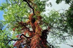 Árbol en el jardín botánico, Oslo, Noruega Fotos de archivo